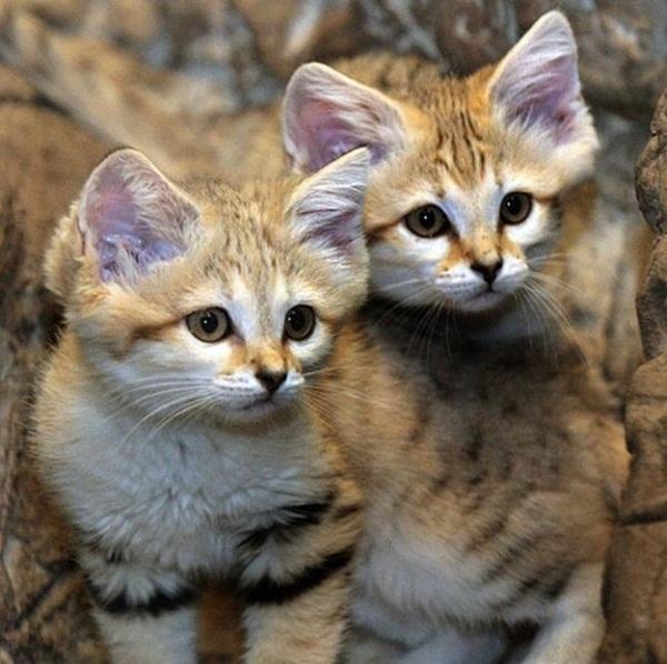 twin-kitten- (3)