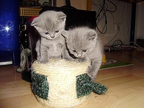 twin-kitten- (4)