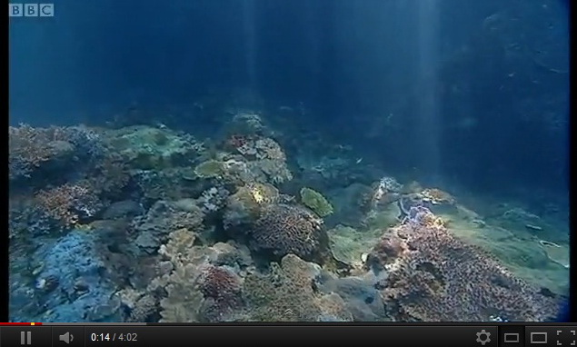 """underwater video of indonesia"""