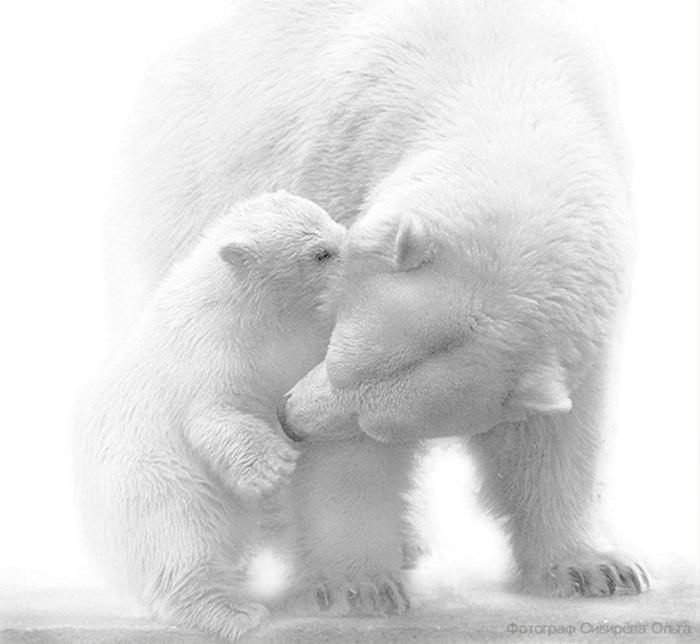 white-bear-01