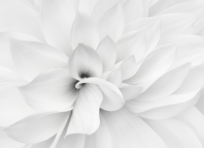 white-beauty-08