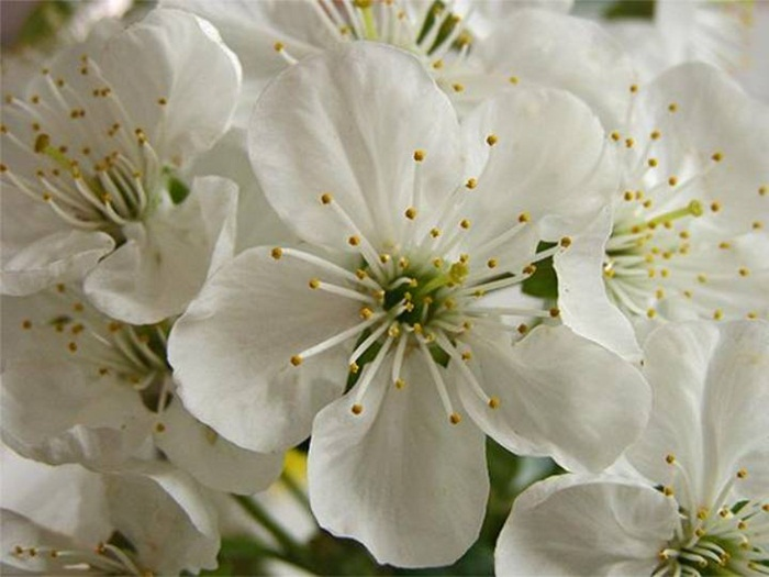 white-flowers-07