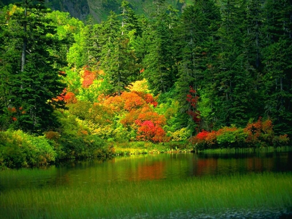beautiful-nature-wallpapers- (12)