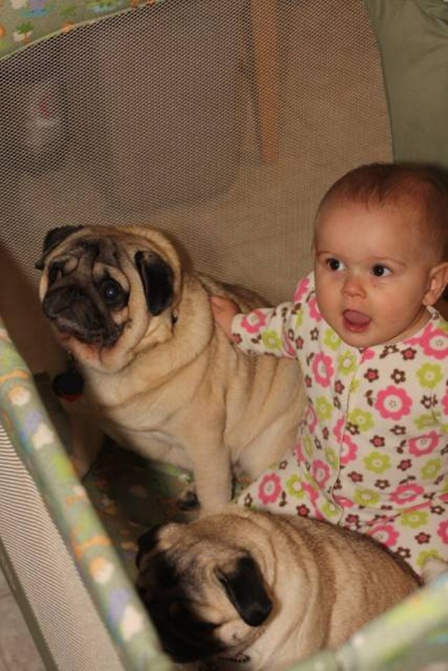cute-babies-with-dogs- (11)