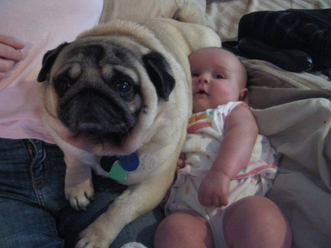 cute-babies-with-dogs- (14)