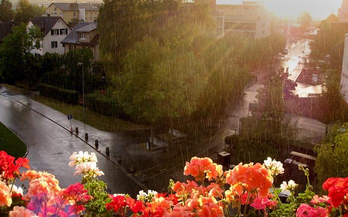 rain-photography- (5)