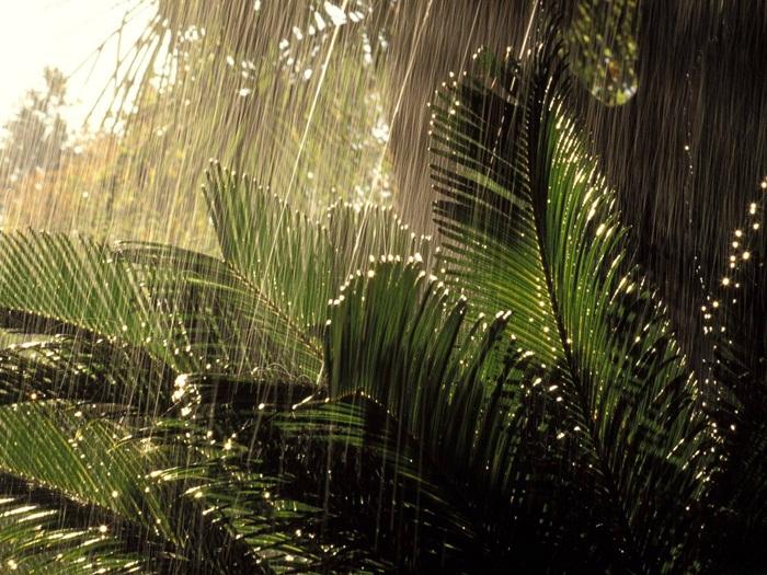 rain-photography- (8)