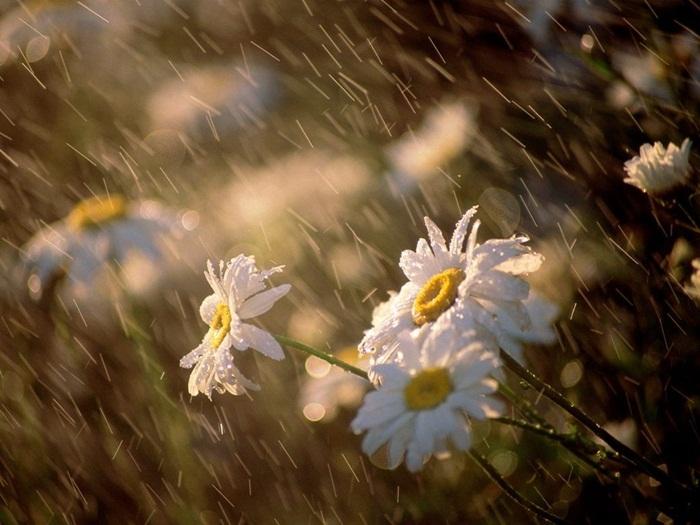 rain-photography- (10)