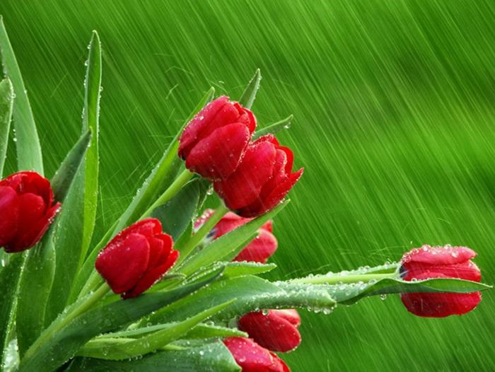 rain-photography- (12)