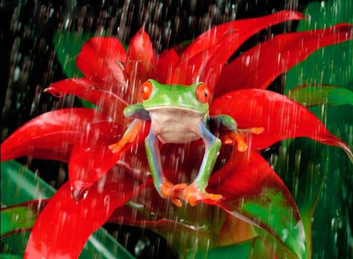 rain-photography- (15)