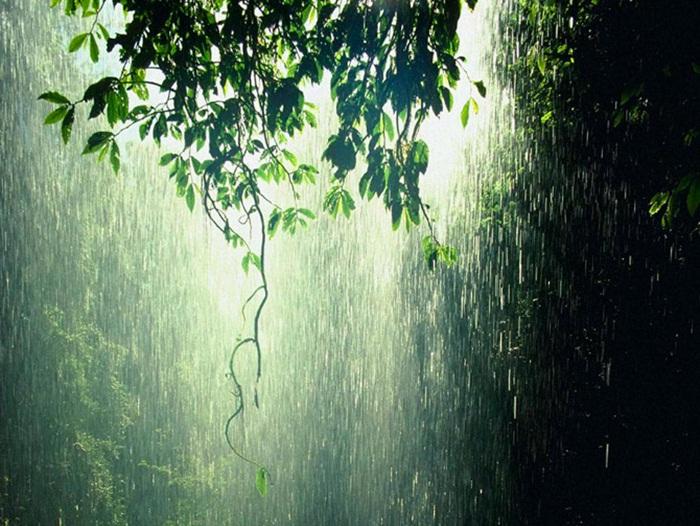 rain-photography- (19)