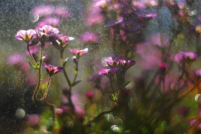 rain-photography- (20)