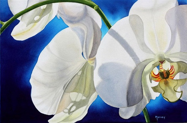 watercolor-flower-paintings-by-marney-ward- (11)