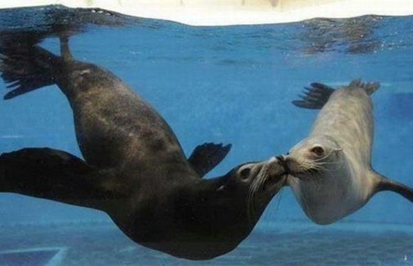 animals-kissing-pictures- (3)