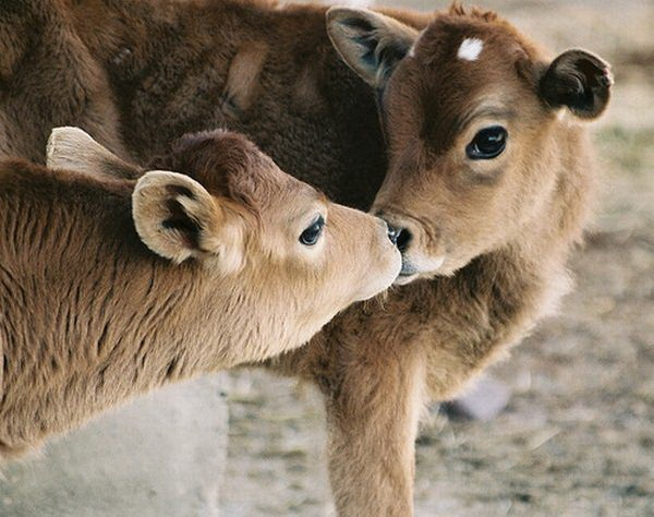 animals-kissing-pictures- (4)