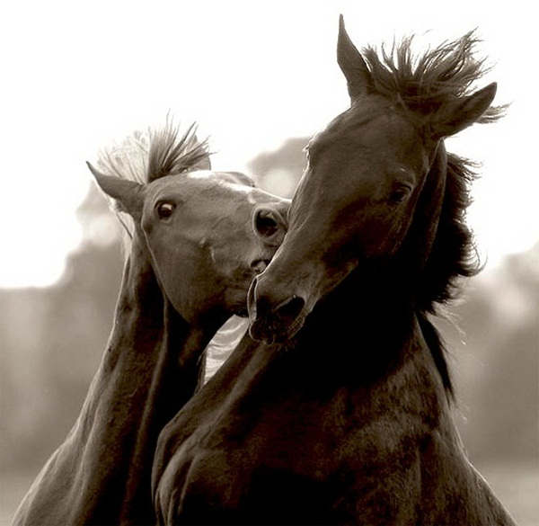 animals-kissing-pictures- (8)