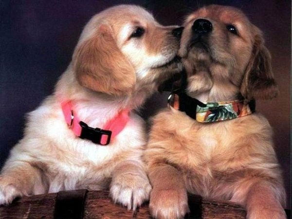 animals-kissing-pictures- (14)