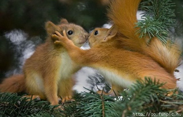 animals-kissing-pictures- (18)