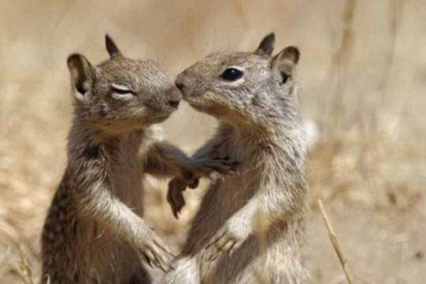 animals-kissing-pictures- (19)