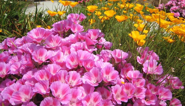beautiful-nature-views-of-california- (6)