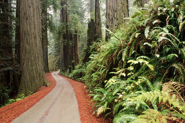 beautiful-nature-views-of-california- (7)