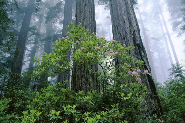 beautiful-nature-views-of-california- (9)