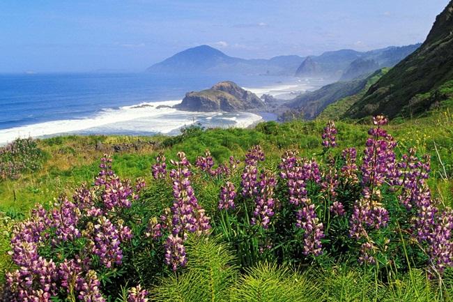 beautiful-nature-views-of-california- (11)
