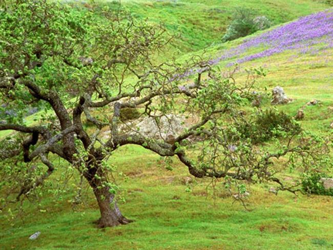 beautiful-nature-views-of-california- (19)