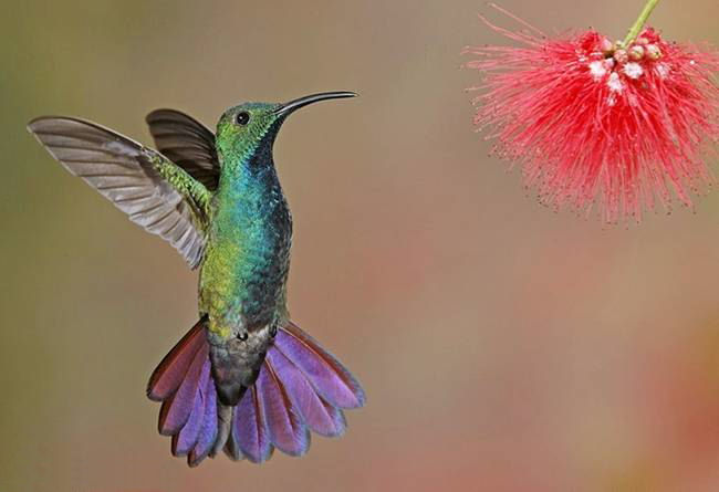 colorful-hummingbirds- (16)