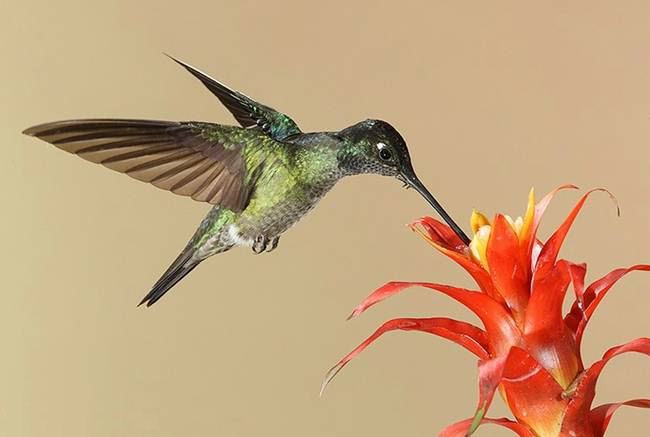 colorful-hummingbirds- (17)