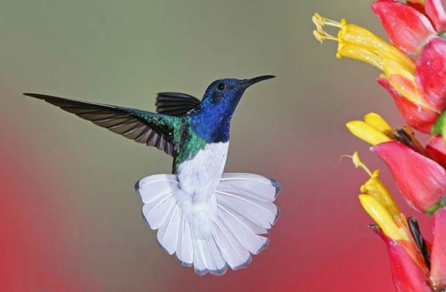 colorful-hummingbirds- (18)