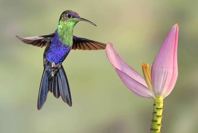 Hummingbirds are hypersensitive searchers.