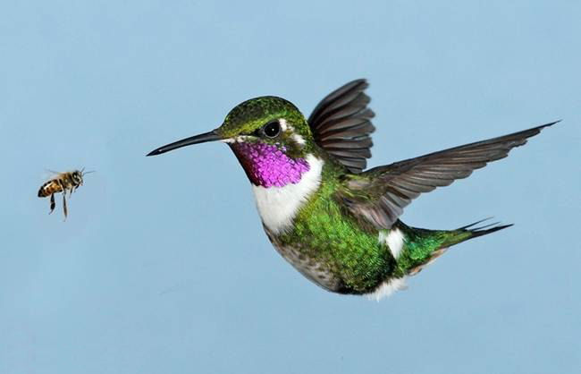 colorful-hummingbirds- (23)