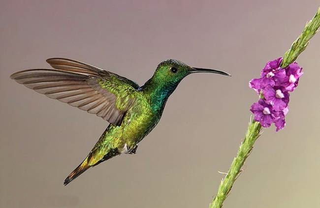 colorful-hummingbirds- (24)