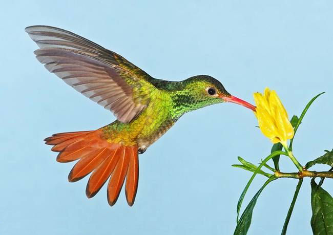 colorful-hummingbirds- (26)