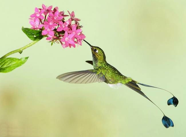 colorful-hummingbirds- (29)