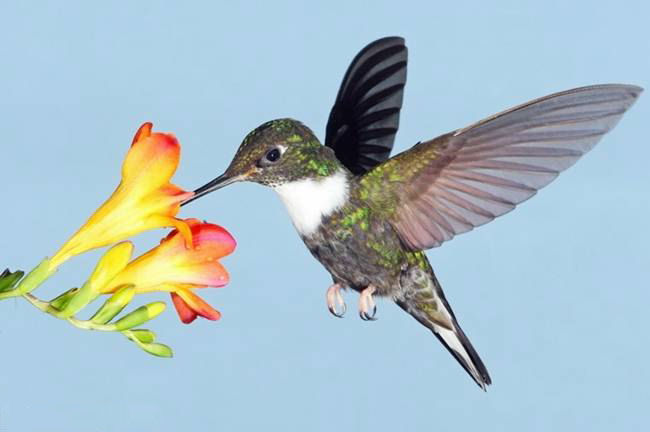 colorful-hummingbirds- (3)