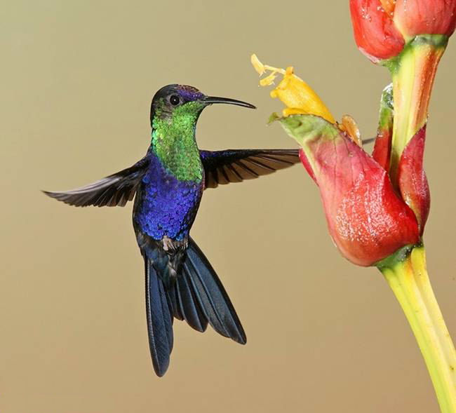 colorful-hummingbirds- (30)
