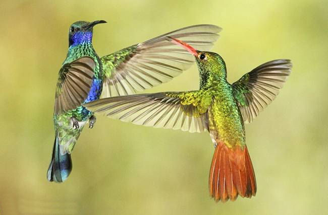 colorful-hummingbirds- (31)