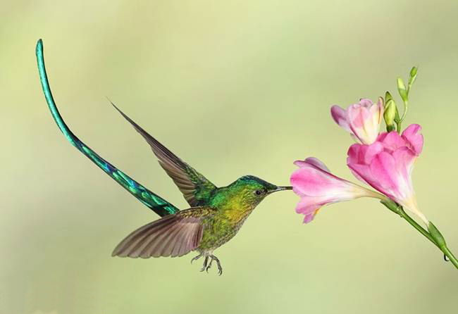 colorful-hummingbirds- (34)