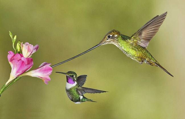 colorful-hummingbirds- (7)