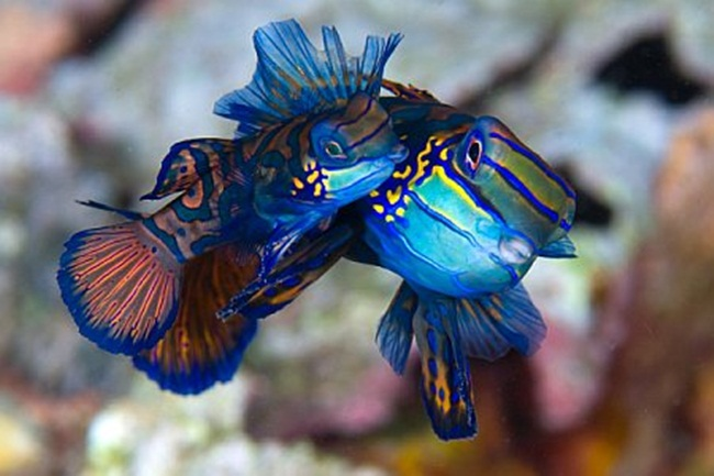 colorful-tropical-fishes- (21)