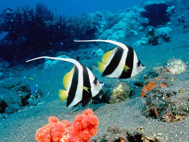colorful-tropical-fishes- (26)