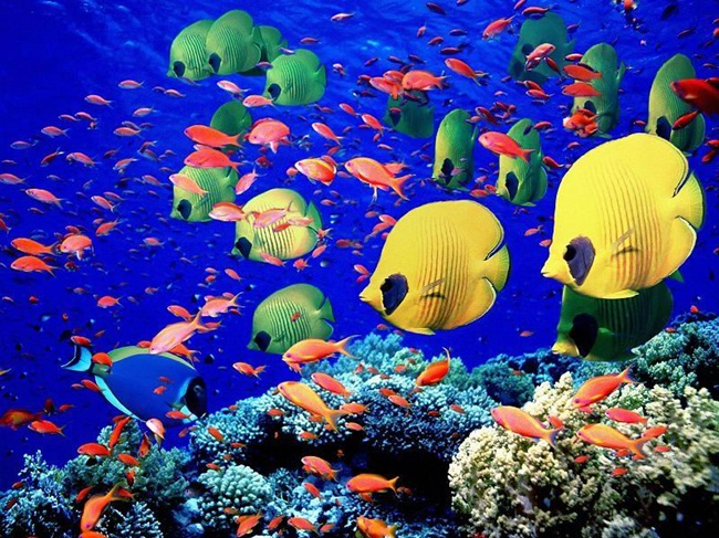 colorful-tropical-fishes- (27)