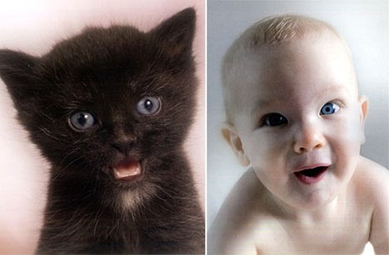 cute-babies-poses-alike-animals-babies- (4)