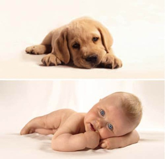 cute-babies-poses-alike-animals-babies- (8)