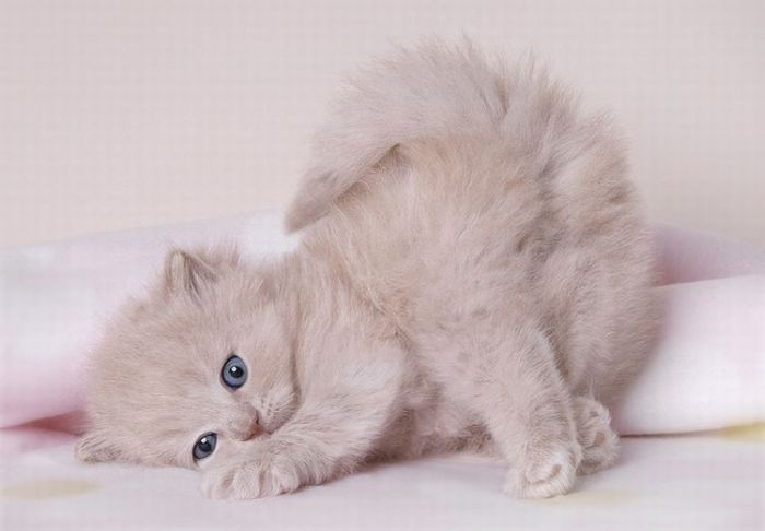 cute-kitten-pictures- (27)