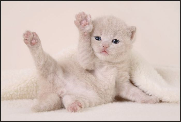 cute-kitten-pictures- (31)