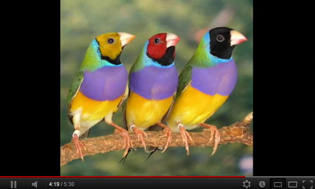 """exotic-birds-video"""