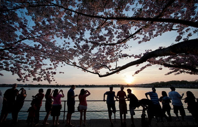 photos-of-cherry-blossom-festival-in-washington- (9)